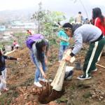 Vecinos se unen para sembrar árboles en Tablada de Lurín
