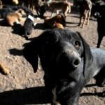Envenenan a once perros para robar casas y autos