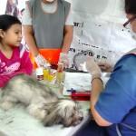 Mascotas de AA.HH Santa Lucia de Lurín son esterilizados para combatir sobrepoblación