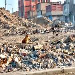 Vecinos aseguran que camión municipal de basura no circula por avenidas 200 millas y separadora industrial