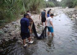 Aparecen peces muertos en río