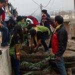 Siembran 200 árboles en la zona de Lomo de Corvina de Villa El Salvador