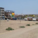 Plantas que fueron retiradas de ciclovía para instalación de circo no son devueltas